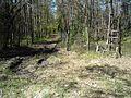 Chroniony siatka obszar lasu dla szczególnych gatunków drzew. - panoramio.jpg