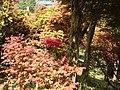 Cinan Garden 次男花園 - panoramio (1).jpg