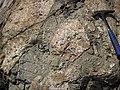 Clast-rich impact pseudotachylite (Sudbury Breccia, Paleoproterozoic, 1.85 Ga; Windy Lake Northwest roadcut, Sudbury Impact Structure, Ontario, Canada) 69 (47758360641).jpg