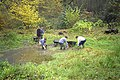 Clearing the pond in Digby's Dell, Pound Wood - geograph.org.uk - 1670474.jpg