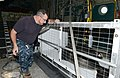 Coast Guard, NOAA transports two rehabilitated Hawaiian monk seals to Oahu 150903-G-XD768-004.jpg