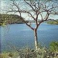 Collectie Nationaal Museum van Wereldculturen TM-20029692 Zicht op een meer tussen bergen, met op de voorgrond een boom Bonaire Boy Lawson (Fotograaf).jpg