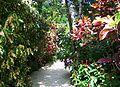 Color garden trail QEII botanic park.jpg
