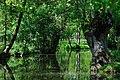 Conche de la Venise Verte.jpg