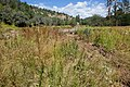 Continental Divide Trail - Flickr - aspidoscelis (36).jpg