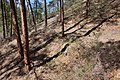 Continental Divide Trail - Flickr - aspidoscelis (43).jpg