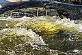 Creek Thaw (124801933).jpg