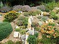 Crevice Garden - Flickr - brewbooks (1).jpg