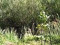 Croatia P8134569 (3937340574).jpg
