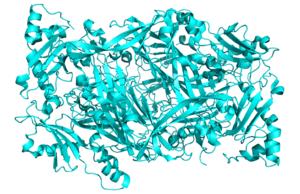 Diamine oxidase - Image: Crystal Structure of Human Diamine Oxidase