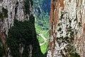 Curvas sinuosas e paredões de formação em basalto do Canyon Itaimbezinho e ao fundo o Rio do Boi.jpg