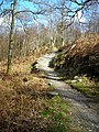 Cycle Trail in Dalbeattie Forest - geograph.org.uk - 392718.jpg