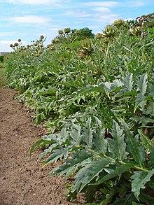 Pflanzen günstig online kaufen