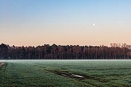 Dülmen, Dernekamp, Mond bei Sonnenaufgang -- 2021 -- 6988.jpg