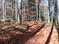 D-BY - Rohrbachtobel im Wirlinger Forst 1638.JPG