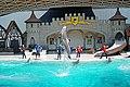 DSC09287 - Dolphin Show (37223499455).jpg