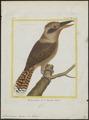 Dacelo gigas - 1700-1880 - Print - Iconographia Zoologica - Special Collections University of Amsterdam - UBA01 IZ16800181.tif