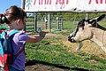 Deer Meadow Farms Corn Maze, Deacon Rd, Birds Hill (502029) (15755483094).jpg