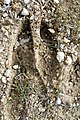Deer tracks near Saddlerock Wenatchee Washington.jpg