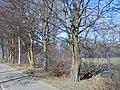 Delft - 2013 - panoramio (697).jpg