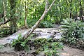 Delightful jungle stream at Kuang Si waterfall (14582493986).jpg
