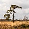 Delleboersterheide – Catspoele Natuurgebied van It Fryske Gea. Omgeving van het heideveld 008.jpg