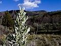 Deschutes Wild and Scenic River -- Beavertail (26122290185).jpg