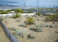 Desert Tortoise Enclosure at Ivanpah Solar Electricity Generating Plant (14010958854).jpg
