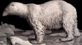 Dessin ursus maritimus ours polaire petit.png