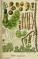 Deutschlands flora in abbildungen nach der natur (1832) (20863254396).jpg
