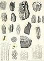 Die im Bernstein befindlichen organischen Reste der Vorwelt, gesammelt (1845) (20617538718).jpg