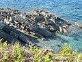 Dip in stratified rocks below Rosemullion Head - geograph.org.uk - 835837.jpg