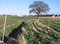 Ditch, tree and public footpath - geograph.org.uk - 782070.jpg