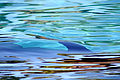 Dolphin Cove 15.jpg