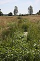 Drainage ditch and meadow, Bures - geograph.org.uk - 860248.jpg
