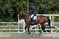 Dressage west meadow, levitating horse (27185638740).jpg