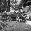 """Drva (drobiž) vozijo z vozom """"kounice"""", Malence 1956.jpg"""