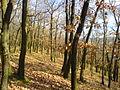 Dubový les na jižním svahu Housiny v pozdním podzimu.jpg