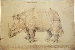 Σχέδιο του ρινόκερου με μολύβι και μελάνι,  Άλμπρεχτ Ντύρερ, 1515 (Βρετανικό Μουσείο). Στη λεζάντα του σχεδίου αναγράφεται ως έτος άφιξης του θηλαστικού στη Λισαβόνα το 1513 (sic).