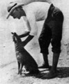 E. J. Banfield, The Beachcomber, with dog, Dunk Island, circa January 1913.tiff