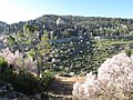 Ein Kerem, Visitation mountain during almond flowering season - photo Ron Havilio.JPG