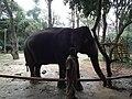 Elephant from Bannerghatta National Park 8687.JPG