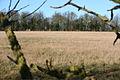 Emmanuel Knoll Plantation - geograph.org.uk - 679709.jpg