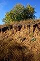 Erosion - panoramio (3).jpg