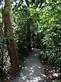 Everglades Gumbo Limbo Trail - panoramio.jpg