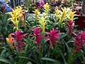 Exotic Flowers.jpg