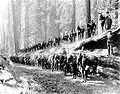 F-Troop-6th-Cavalry-Regeiment-US-1899-Yosemite-NPS.jpg
