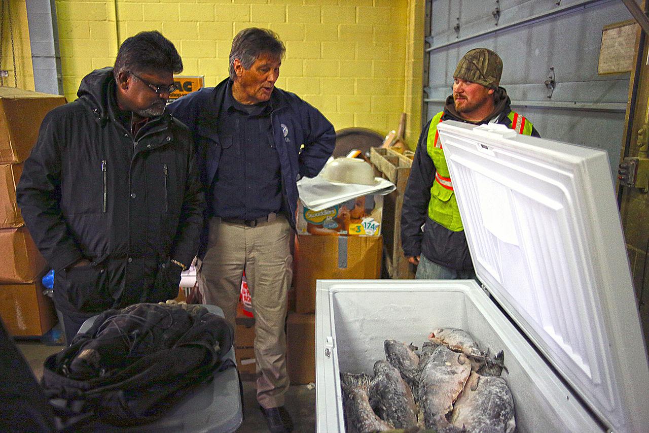 Salmon Dog Food Make Dogs Smell