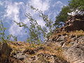 Fale - Trentino Alto Adige - 29.jpg