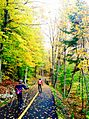 Fall in Gatineau Park.jpg